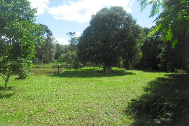 Vende-se chácara em cai de baixo - Quitandinha (cód. A289) - Foto 8
