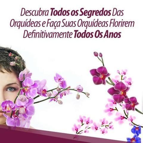 Curso Como Cuidar de Orquídeas + 2 Super bonus - Foto 4
