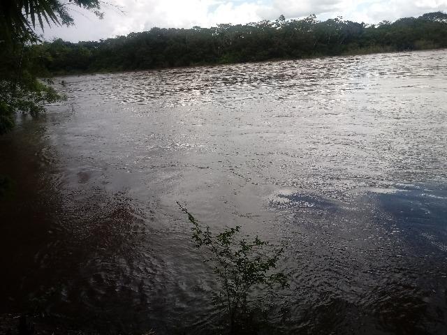 Vendo Chácara - Entre Guia e Acorizal - Rio Cuiabá - Foto 6