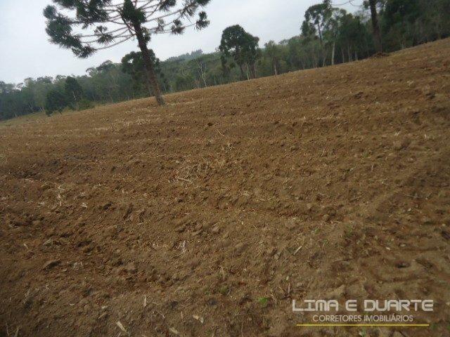 Chácara à venda em Bituvinha, Mafra cod:216CH - Foto 14