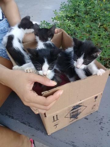 Gatinhos para Adoção Responsável - Foto 4