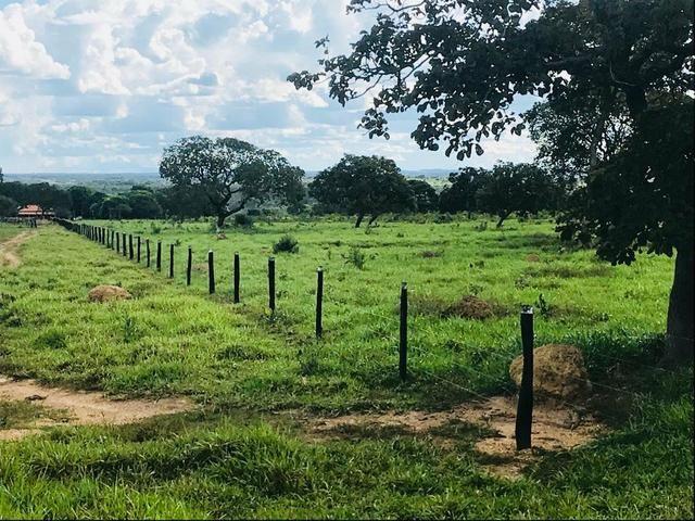 Fazenda 354,hectares - Foto 7