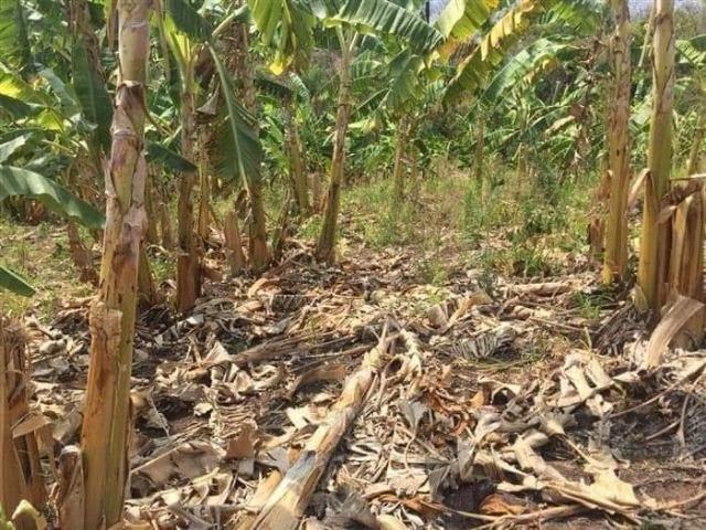 Fazenda de 170 hectares. São Gabriel do Oeste - Foto 11