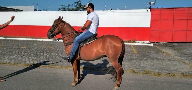 Cavalo Lazão Baixeiro. - Foto 4