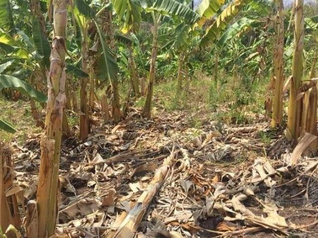Fazenda de 170 hectares. São Gabriel do Oeste - Foto 6