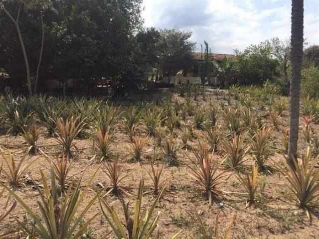 Fazenda de 170 hectares. São Gabriel do Oeste - Foto 3