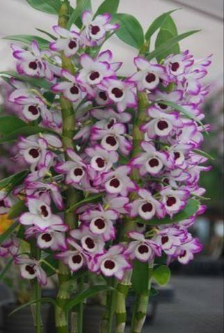 Curso Como Cuidar de Orquídeas + 2 Super bonus - Foto 2
