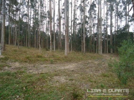 Chácara à venda em Bituvinha, Mafra cod:216CH - Foto 10