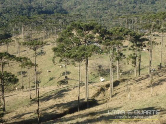 Chácara à venda com 0 dormitórios em Serra alta, São bento do sul cod:194CH - Foto 3