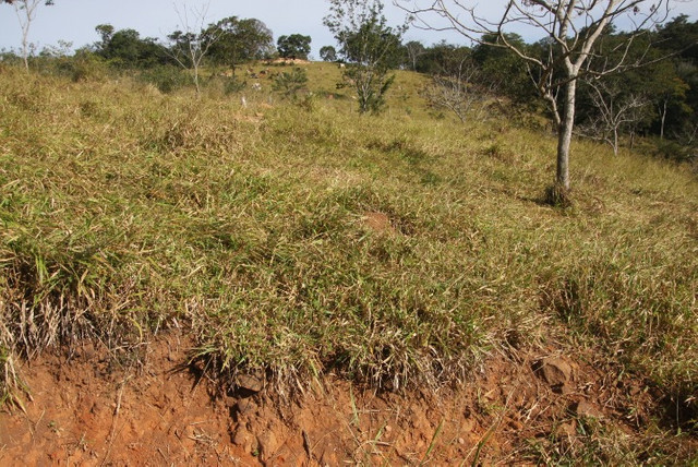 Terreno de 12 hectares em Fortuna de Minas - Foto 18