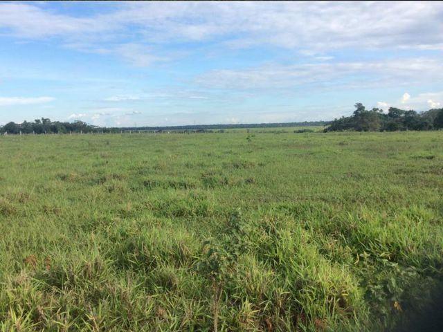 Fazenda em Brasnorte MT - Excelente Opção de Investimento