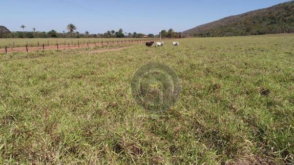 Fazenda para pecuária 185 ha santo antonio leverger - Foto 3
