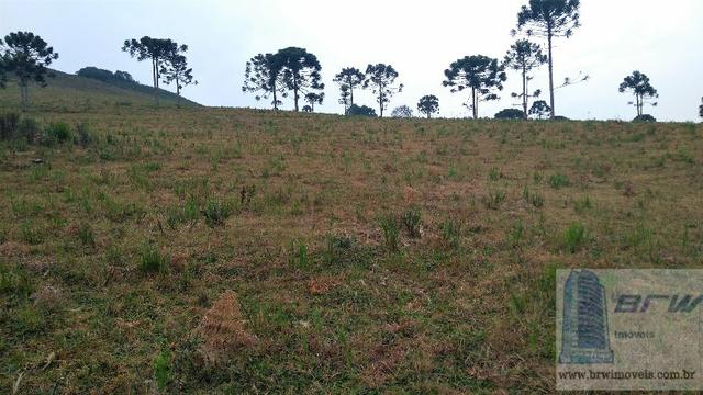 Fazenda 494.000m²(49,4 hectares) em Capão Alto SC - Foto 17