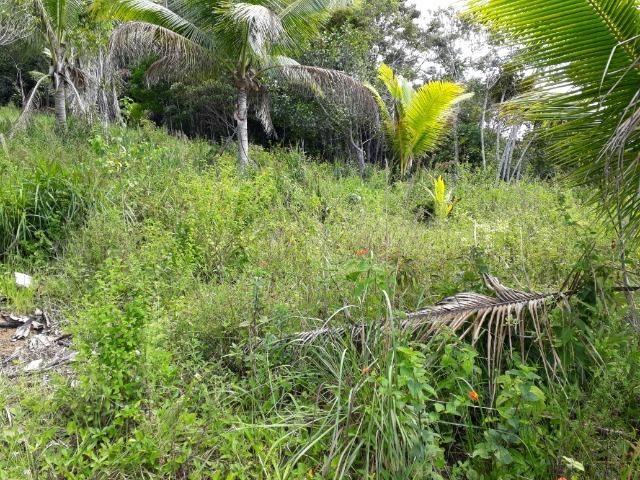 Sítio em Itacaré - Bahia - Foto 11