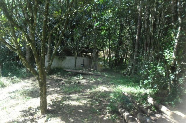 Vende-se chácara em cai de baixo - Quitandinha (cód. A289) - Foto 11