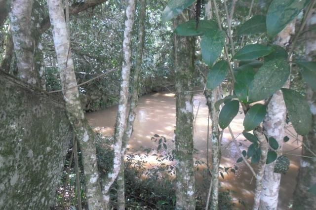 Vende-se chácara em cai de baixo - Quitandinha (cód. A289) - Foto 12