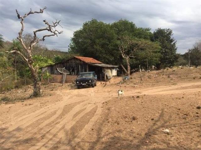 Fazenda de 170 hectares. São Gabriel do Oeste - Foto 10