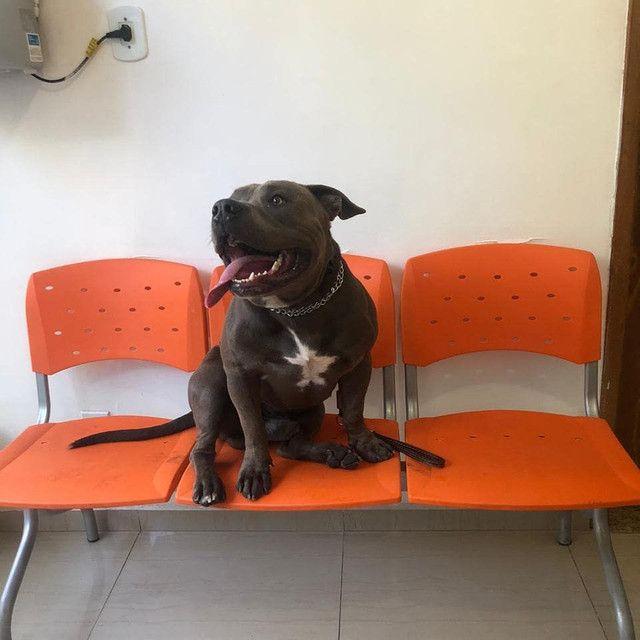 Hospedagem para cães  - Foto 5