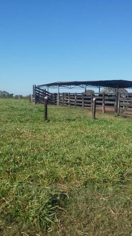 Fazenda 354,hectares - Foto 2