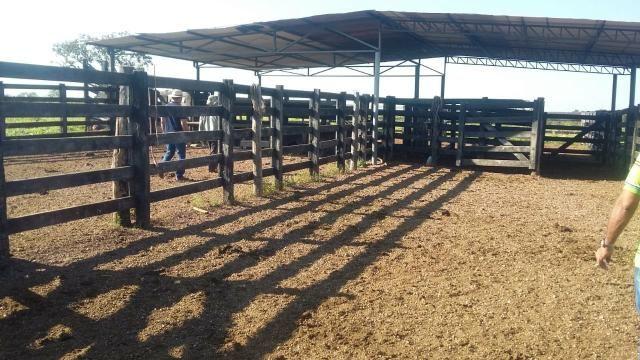Fazenda 354,hectares - Foto 9