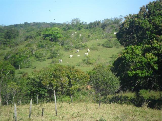 Sítio em São Vicente - Araruama / RJ - Foto 2