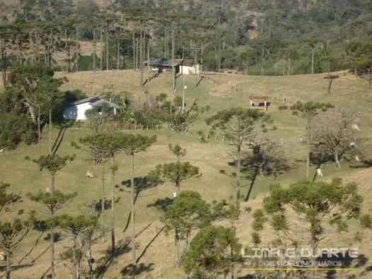 Chácara à venda com 0 dormitórios em Serra alta, São bento do sul cod:194CH - Foto 5