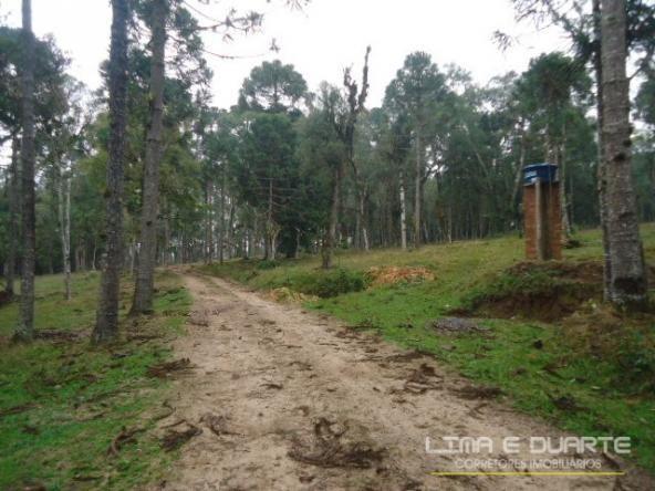 Chácara à venda em Bituvinha, Mafra cod:216CH - Foto 5