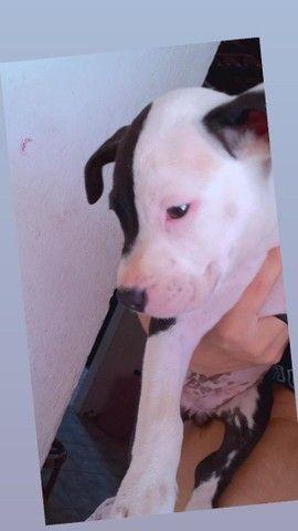 Cachorrinha de 1 mês  - Foto 2