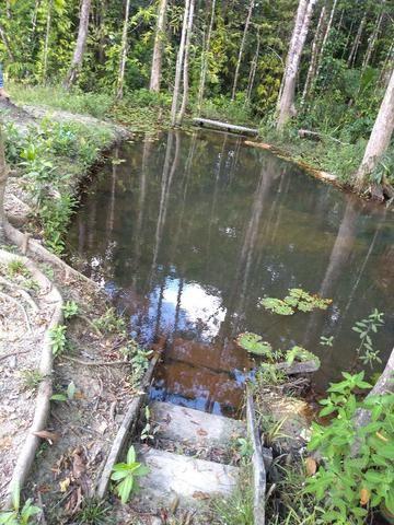 70 mil reais sito antes a Terra Alta no Pará 100x120 ,igarape ,cercado, casa zap *