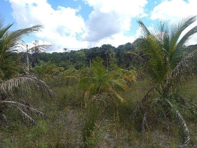 70 mil reais sito antes a Terra Alta no Pará 100x120 ,igarape ,cercado, casa zap * - Foto 5