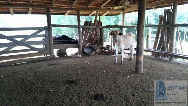 Fazenda 494.000m²(49,4 hectares) em Capão Alto SC - Foto 5