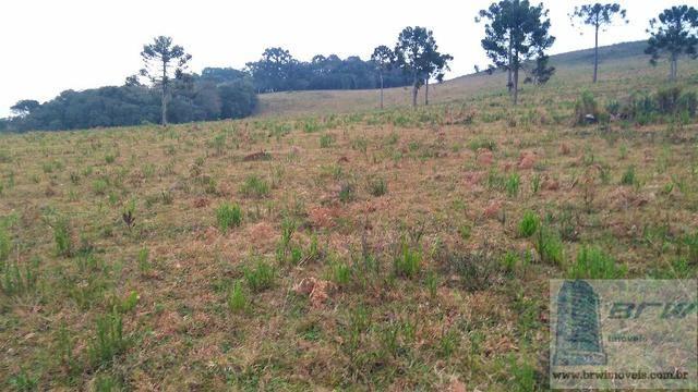 Fazenda 494.000m²(49,4 hectares) em Capão Alto SC - Foto 6
