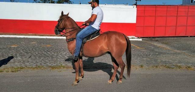 Cavalo Lazão Baixeiro. - Foto 2