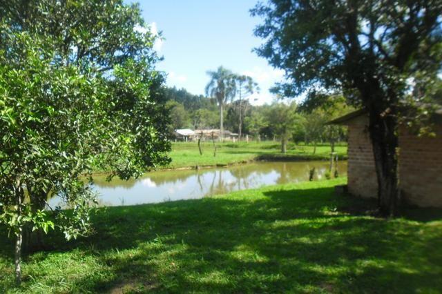 Vende-se chácara em cai de baixo - Quitandinha (cód. A289) - Foto 16