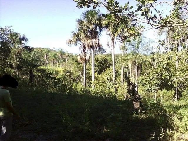 Fazenda de 170 hectares. São Gabriel do Oeste - Foto 8