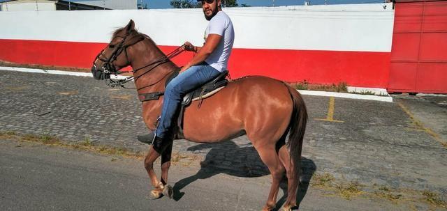 Cavalo Lazão Baixeiro.