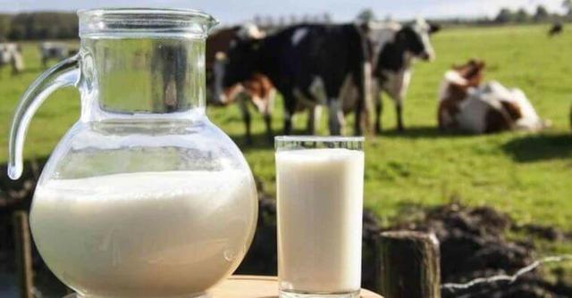 Resultado de imagem para leite de vaca