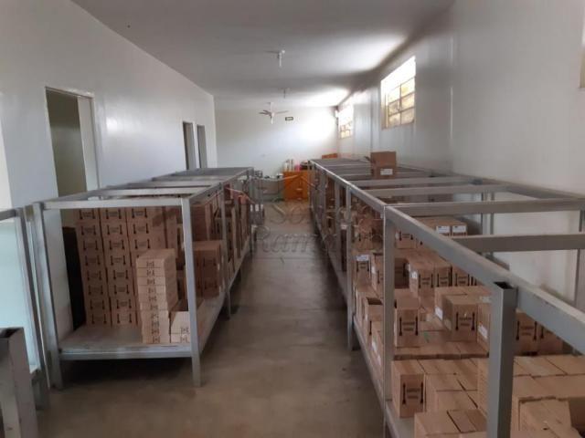 Escritório à venda com 5 dormitórios em Jardim sao luiz, Ribeirao preto cod:V13707 - Foto 13