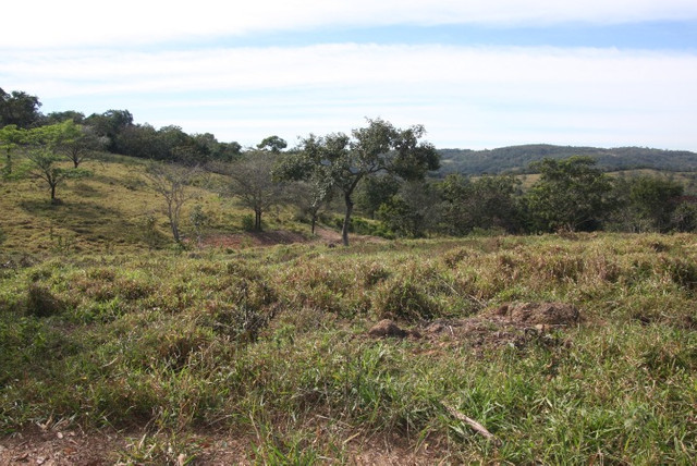 Terreno de 12 hectares em Fortuna de Minas - Foto 16