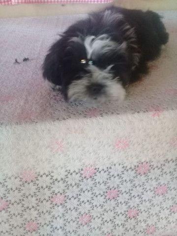 Cachorro  - Foto 2