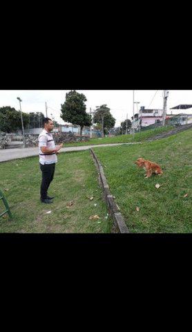 Hospedagem para cães  - Foto 3