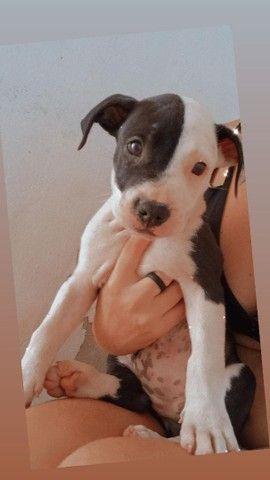 Cachorrinha de 1 mês  - Foto 5