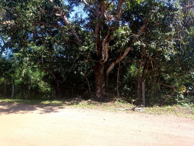 Chácara em Santo Antônio - Foto 3