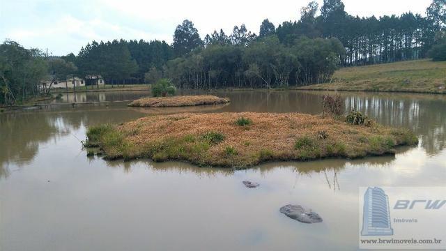 Fazenda 494.000m²(49,4 hectares) em Capão Alto SC - Foto 16