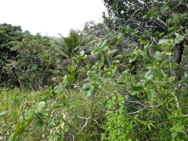 Sítio em Itacaré - Bahia - Foto 6