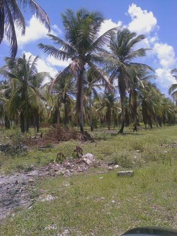 Vendo terreno (1000m²) no Parque Santa Ismênia - Macaíba.