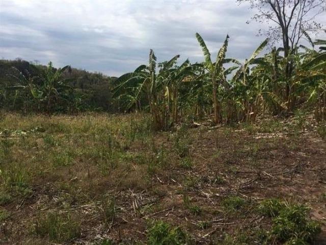 Fazenda de 170 hectares. São Gabriel do Oeste - Foto 9