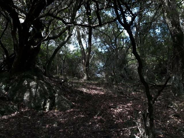 Chácara no 2 distrito de Piratini - Foto 8