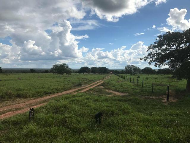 Fazenda 354,hectares - Foto 4
