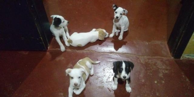 Vende-se seis cachorrinhos rua madressilva 3598 bairro conceição porto velho RO